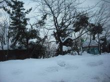 仙台のおいしいもの・宮城のおいしいものをご紹介-鶴岡、雪で枝が折れている
