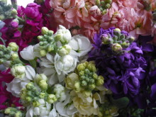 仙台のおいしいもの・宮城のおいしいものをご紹介-最上 花'sフラワー