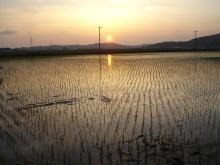 仙台のおいしいもの・宮城のおいしいものをご紹介-石巻 農業 働き隊
