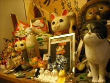 仙台のおいしいもの・宮城のおいしいものをご紹介-田代島 はま屋 ネコ